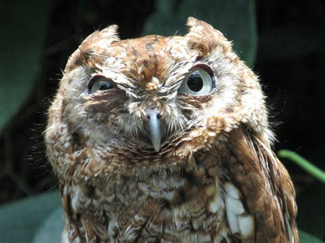 20 Angry Animals: You Sure You Didn't Offend Them