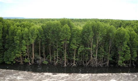 What are mangroves worth? There's no easy answer | IUCN