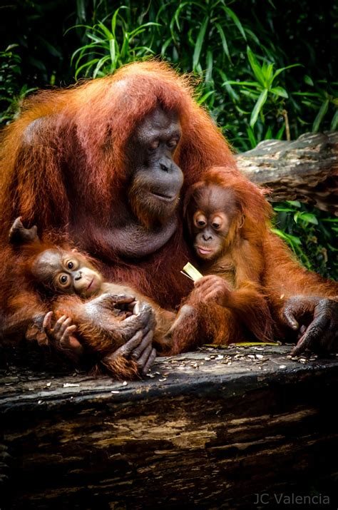 Animal Family Photos That Will Touch Your Heart