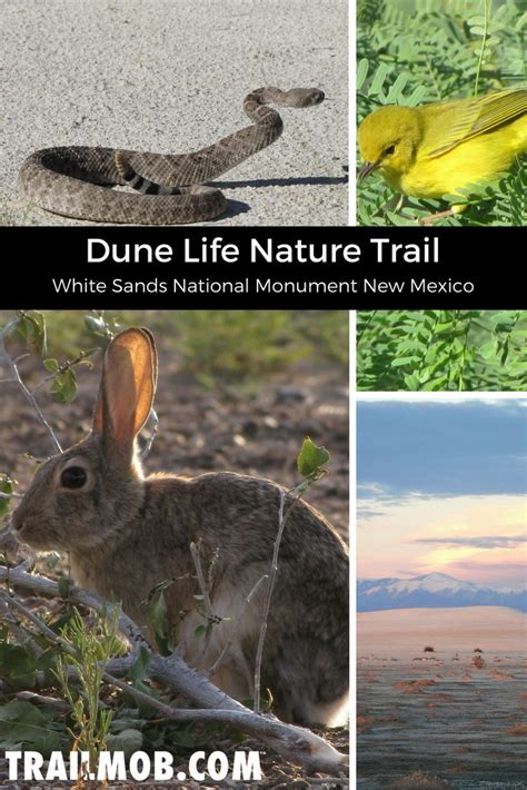Dune Life Nature Trail is a very easy kid friendly hike in