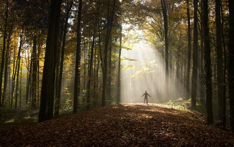 How nature helps your brain | SBS Life