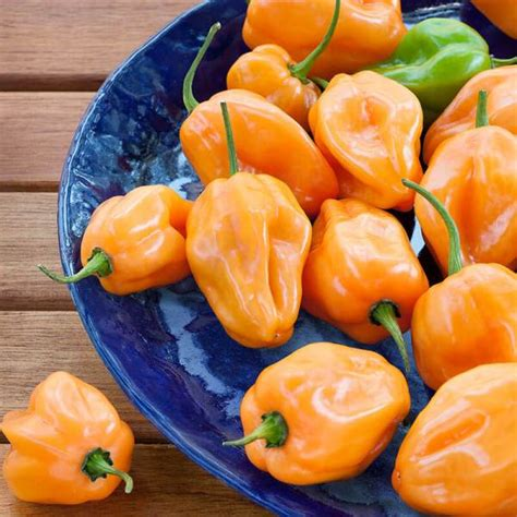 Habanero Hot Pepper: High-Heat, Good for Sauces & Basting