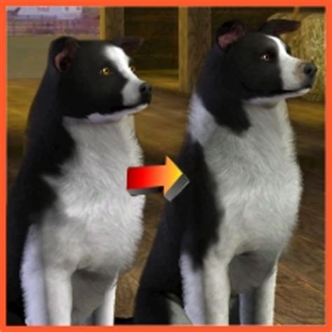 Border Collie Improved by LittleV - The Exchange