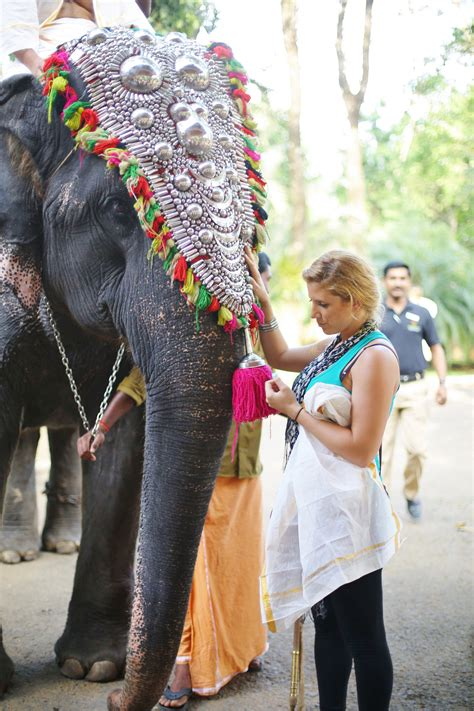 8 Wildlife Animals You Can Expect To See In Kerala, India
