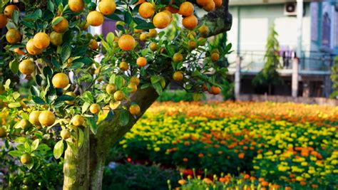 Oranges and lemons - how to make your citrus spectacular