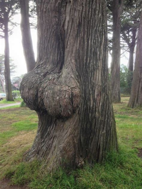 Things That Look Like Butts - Barnorama